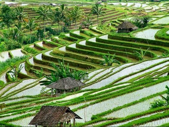 Wisata Budaya, Wisata Alam Dan Wisata Belanja Di Ubud Bali